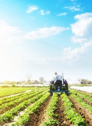 A farmer on a tractor loosens the soil and removes weeds on a potato plantation. Farming agricultural industry. Processing and cultivation of soil. The process of growing food on a farm.