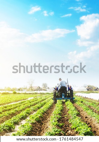 A farmer on a tractor loosens the soil and removes weeds on a potato plantation. Farming agricultural industry. Processing and cultivation of soil. The process of growing food on a farm. Photo stock ©