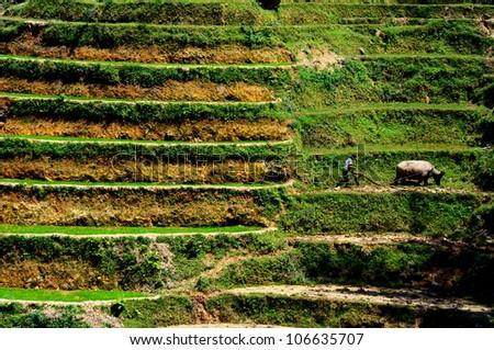 a farmer plows his terraced fields, Sapa, Vietnam