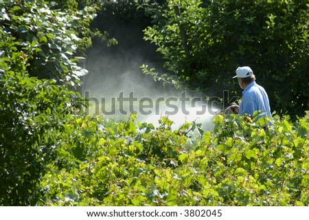 A farmer sprays his vines with some chemical substance, wearing only a face mask.