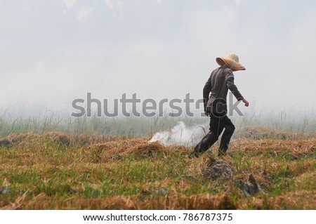 A farmer walk along a burning straws at harvested rice fields. Straws burned to prepare the field for next cropping season.