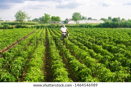 A farmer walks through a plantation field and spreads fertilizer. Agroindustry, cultivation of sweet peppers. Crop care. Hard work and traditional farming. Feeding vegetables with mineral complexes