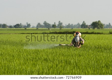 A farmer working at paddy field in Sekinchan, Malaysia.
