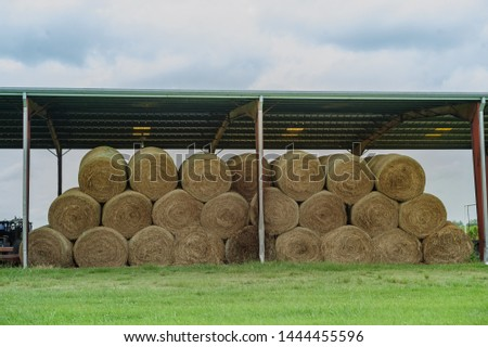 A farmers freshly baled round hay bales, used to feed large herds, are stacked under a metal roof in a country field located in Erath, South Louisiana. #1444455596