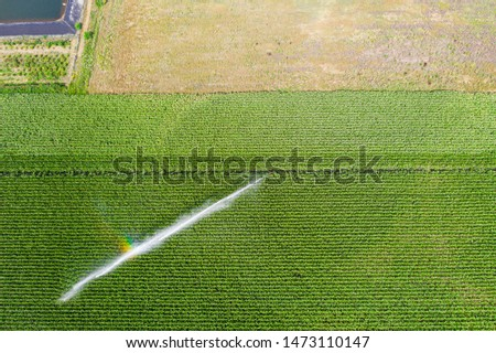 A farmland field with crops of corn - cornfield being sprayd. A farmer watering his fields with an irrigation system.