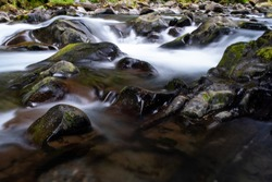 A fast flowing shallow creek runs over algae covered pebbles and rocks in Olympic National Park, Washington State, USA, long exposure to add blurred motion to the  water