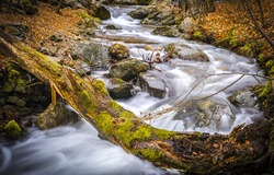 A fast river in an autumn mossy forest. River stream in autumn. Forest river stream in autumn