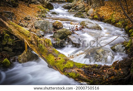 A fast river in an autumn mossy forest. River stream in autumn. Forest river stream in autumn Сток-фото ©