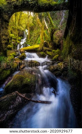 A fast stream flows over mossy stones. Forest river stream. River stream in mossy forest