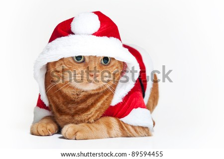 A fat orange Tabby cat lying down and wearing a red and white Santa suit