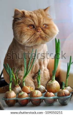 A fat red cat sitting on a windowsill near a window in front of the green onions.