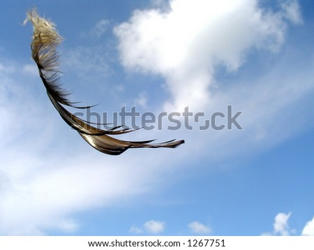 A feather carried by wind.