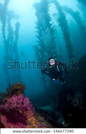 A Female diver descends in the kelp off of Santa Catalina Island in Southern California