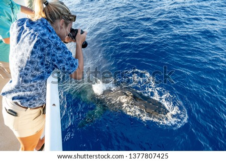 A female photographer taking pictures of a humpback whale surfacing directly underneath her on a whale watching tour in Lahaina, Maui, Hawaii
