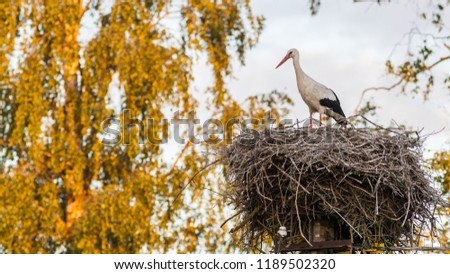 A female stork is standing on a large nest