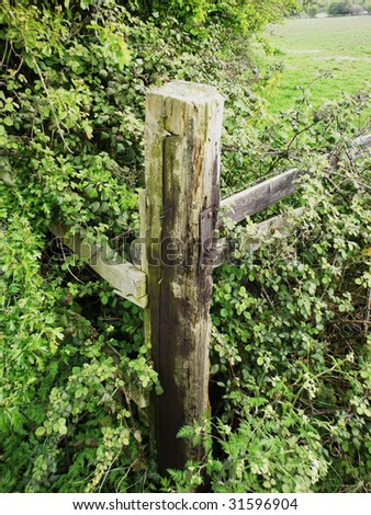 a fence post in an overgrown hedge