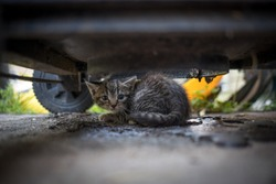 A feral kitten is found underneath a grill. The mother is nowhere to be seen.