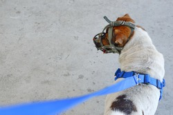 A ferocious dog must wear a muzzle. And the leash to be neat.