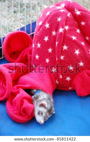 A ferret sleeping in a sack - stock photo