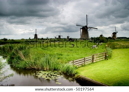 A few dairy cows grazing in a field in front of multiple windmills