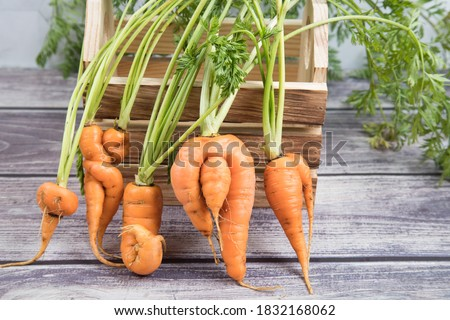 A few deformed, ugly carrot roots with a bizarre shape on the background of a wooden box. Horizontal orientation Stock fotó ©