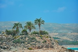 A few palm trees on a rocky beach on a bright summer Sunny day