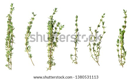 A few sprigs of fragrant thyme isolated on white. Stock photo ©