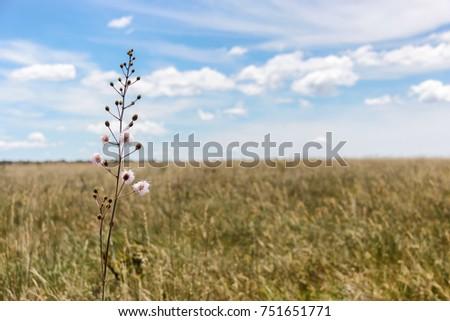 Shutterstock A field, a flower, the wind and an immensity of the Brazilian savannah. Flower of the cerrado. Cerrado Brasileiro.