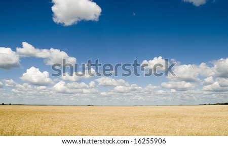 a field and beautiful sky