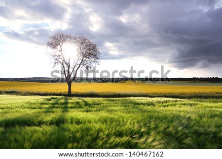 A field and trees against cloudy blue sky