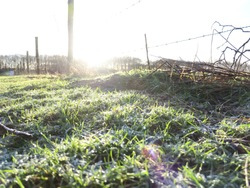 a field in the winter morning sun. With on the grass still some frost. Also some poles with barbedwire