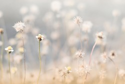 A field of grass flowers light up by a sunset golden evening light. An inspirational nature image for aesthetic of autumn and fall design. Autumn nature in pastel earth tone blurred background.