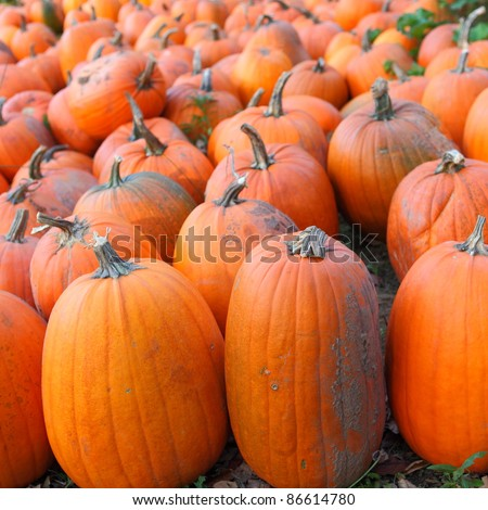 A field of picked pumpkins