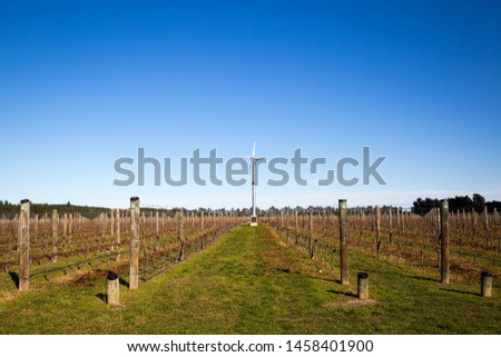 A field of pruned grapevines, with a windmills amongst them to reduce frost damage, in a vineyard in Canterbury, New Zealand #1458401900
