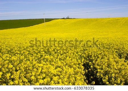 An English Rural Landscape With Fields Of Flowering Rapeseed Ez Canvas