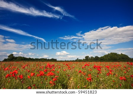 A field of red poppies on a summer afternoon in the English countryside, with cloudy blue skies overhead.