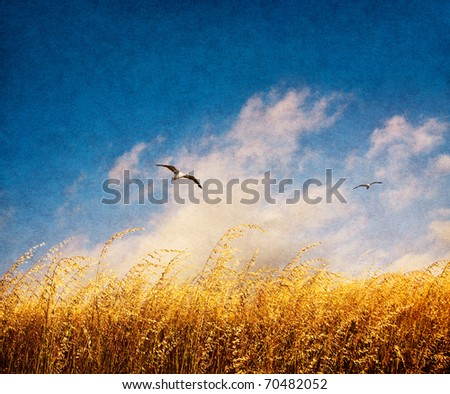 A field of tall, brown Veldt grass with fog and seagulls on a windy day.  Image has a nicely textured and grained paper overlay.