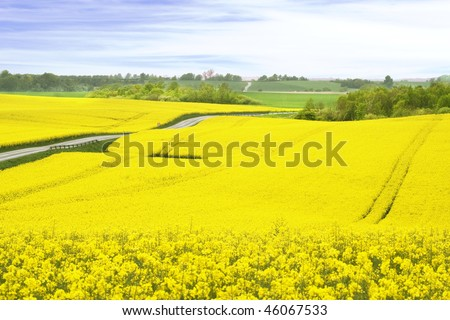 A field of yellow Rapeseed, Denmark - stock photo