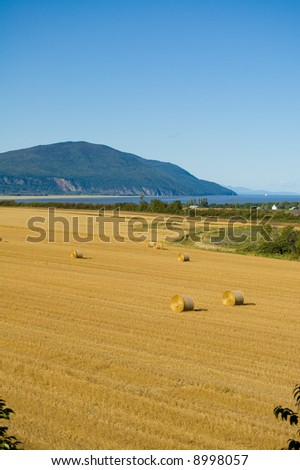 A field on Orlean Island during harvest time autumn.