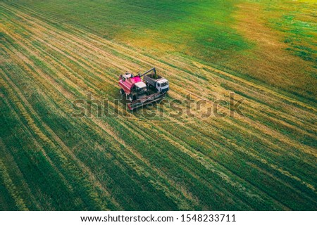 A field with wheat that harvests the harvester at the end of the harvest season. View from above