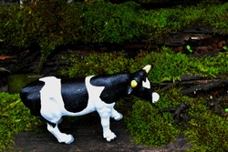 A figurine of a plastic black and white cow stands on moss-covered wood.
