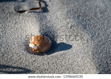 A fine morning of seascapes and seashells at The Hawk beach