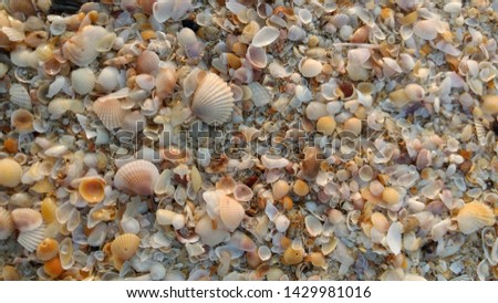 A finer look at sand on the beach reveals a unique pattern and beauty of what sand can be , they are seashells when magnified and looked at closely, The shells together makes a very soothing picture.