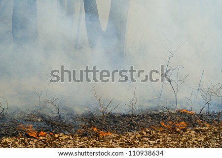 A fire in leafy forest. Early spring.