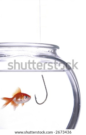 A fish gawks at a hook hanging in the fish bowl. White background.