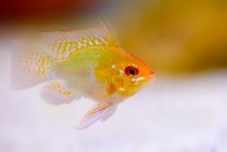 A fish in aquarium