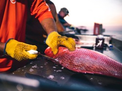A fisherman cleaning a red snapper at a cleaning station on the dock of a marina.