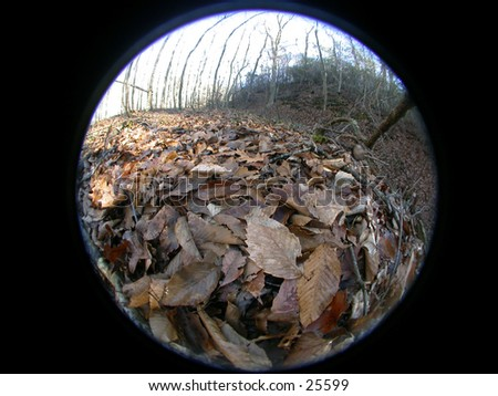 A fisheye image of fallen leaves in the forest of Virgina.