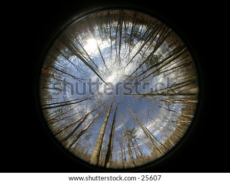 A fisheye image of  the woods in the mountains of Arizona.