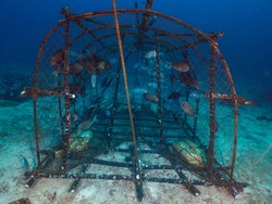 A fishtrap with captive fish in the coral reef in Mergui archipe